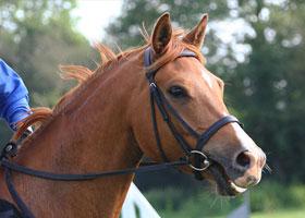Bridle a horse