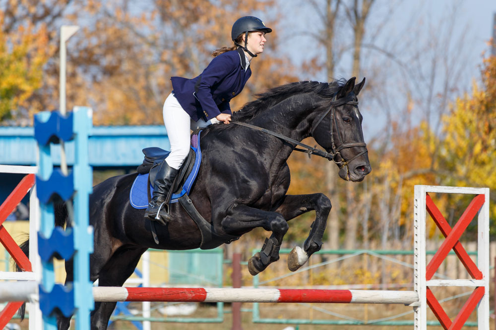 Horses are considered to be man's greatest conquest for a reason